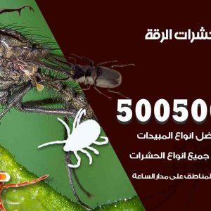 مكافحة حشرات الرقة / 50050647 / شركة مكافحة الحشرات والقوارض
